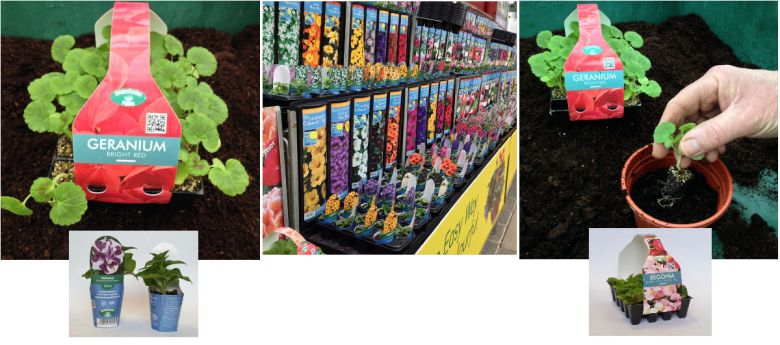 kinder baby plants available from strawberry garden centre, uttoxeter