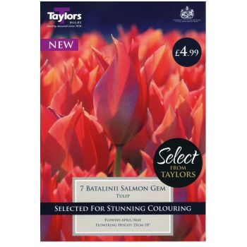 Taylors Bulbs SE2284 Tulip Batalinii Salmon Gem available from Strawberry Garden Centre, Uttoxeter