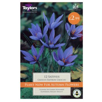 Taylors Bulbs TP683 Crocus Sativus available from Strawberry Garden Centre, Uttoxeter
