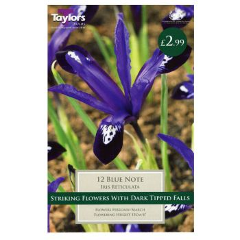 Taylors Bulbs TP844 Iris Dwarf Blue Note available from Strawberry Garden Centre, Uttoxeter
