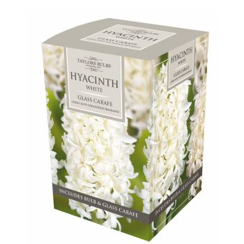Taylors Bulbs AH78w Indoor Hyacinth Carafe available from Strawberry Garden Centre, Uttoxeter