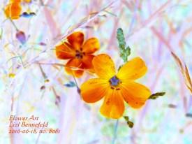 Blue Wild Flax (Art)