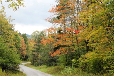 on the road to Spruce Knob