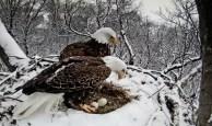 snowy nest exchange