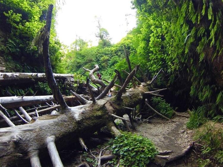 Prehistoric/Treehistoric