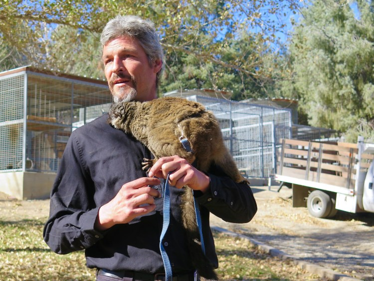 Former punk rocker, Jeff Lee is Steve Martin's nephew. He's been working with the animals since 1984 and currently works as the Educational Program Director at Working Wildlife.