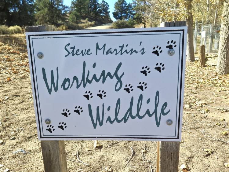Working Wildlife is located two hours north of Los Angeles and sits on 62 acres in Lockwood Valley near the mountain community of Frazier Park.