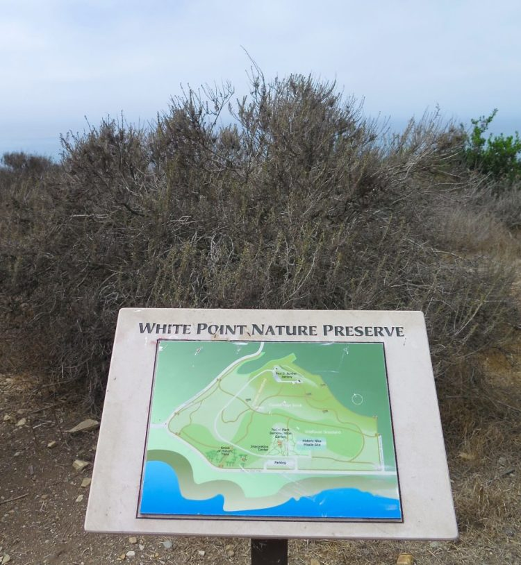 "This area of land, which juts out into the sea to form a point more than 100 feet above sea level, has been called both ""White Point"" and ""White's Point"". The origin of the name is disputed. One version is that it was named for a sailor named White, who jumped ship and swam to shore at this spot, thus ""White's Point""."