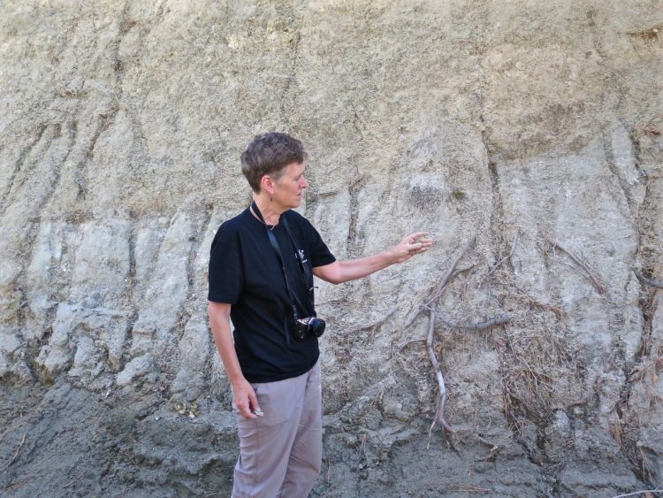 ...aka USGS geophysicist Sue Hough to explain what's really going on here and what's really going on is called a sandy fault gouge.