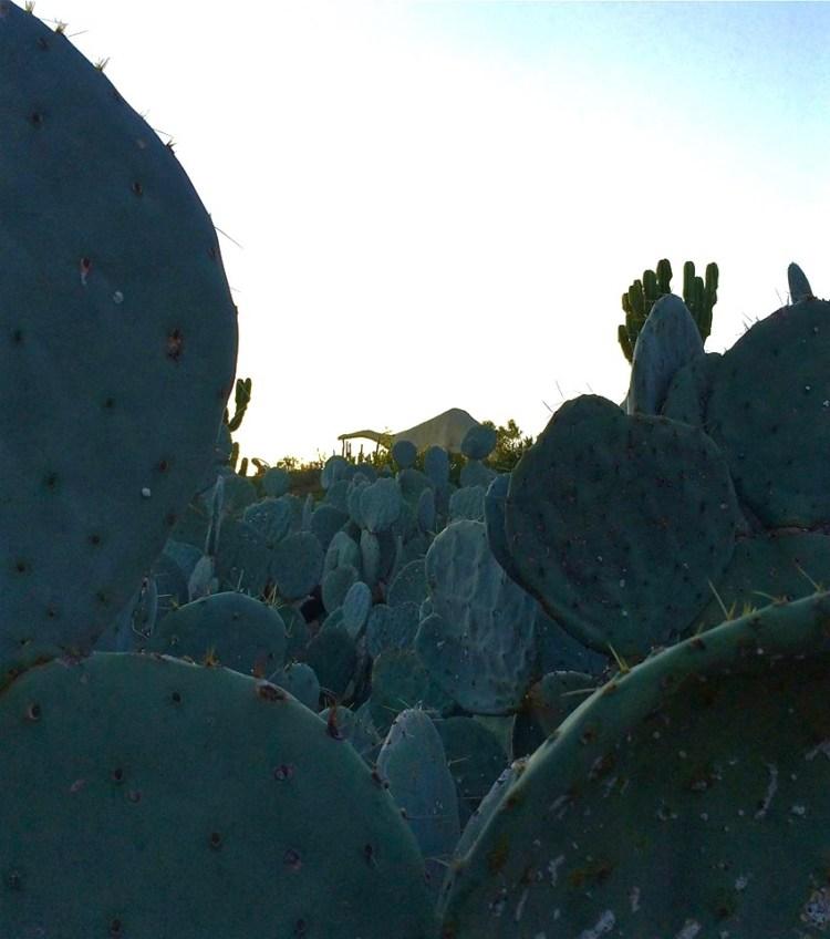 Dino-Cactus