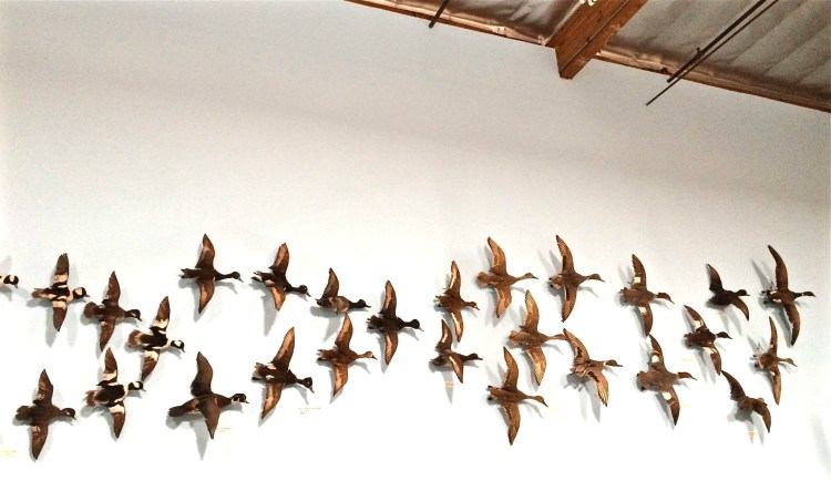 Indoor Flyway