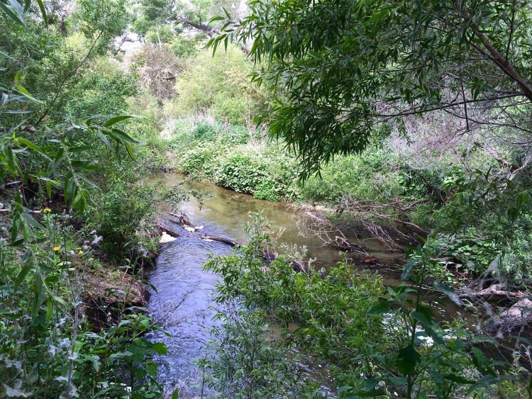 A peek at Mill Creek, which runs through the property that the OCWD owns and manages.