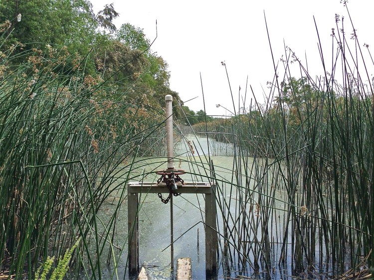 The Prado Wetlands has been at the forefront in advancing treatment wetland technology since it began operations in July 1992.