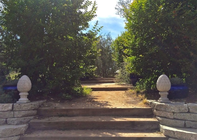 These steps in the center of the garden connect the Olive Allee with the Wish Trees Terrace. They are lined with Italian cypress, Meyer lemons in blue pots, and crape myrtle trees donated by Yoko Ono after her Wish Tree exhibit at One Colorado in 2008.