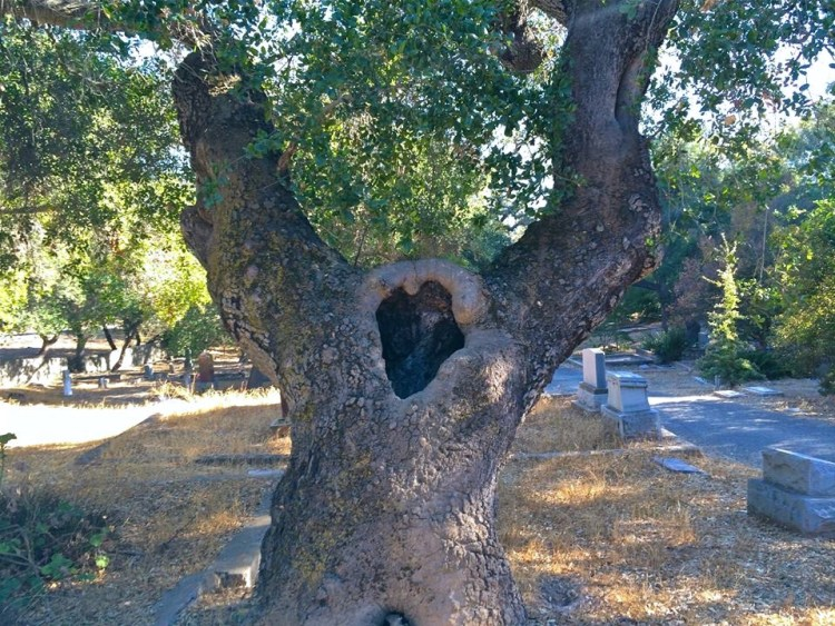 This knotty tree's got heart.