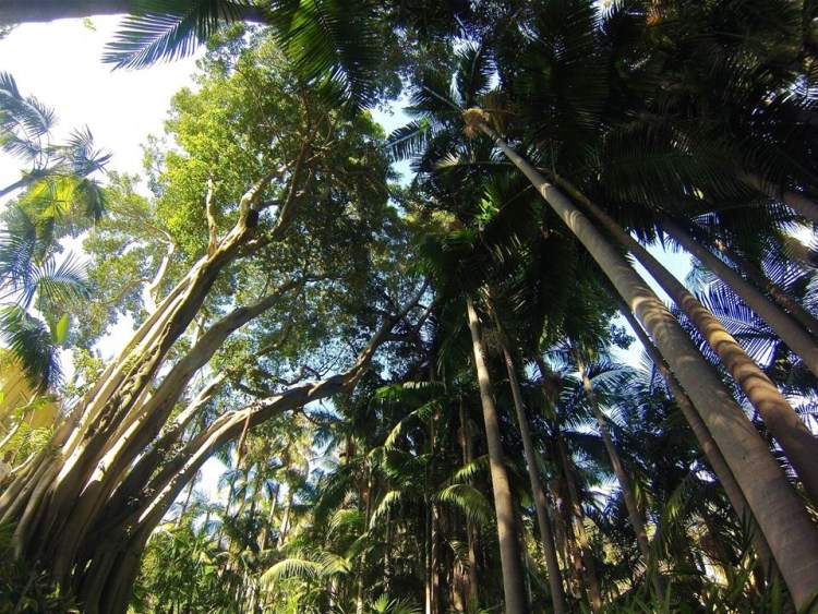 The Tropical Palm Garden includes a grove of King Palms...