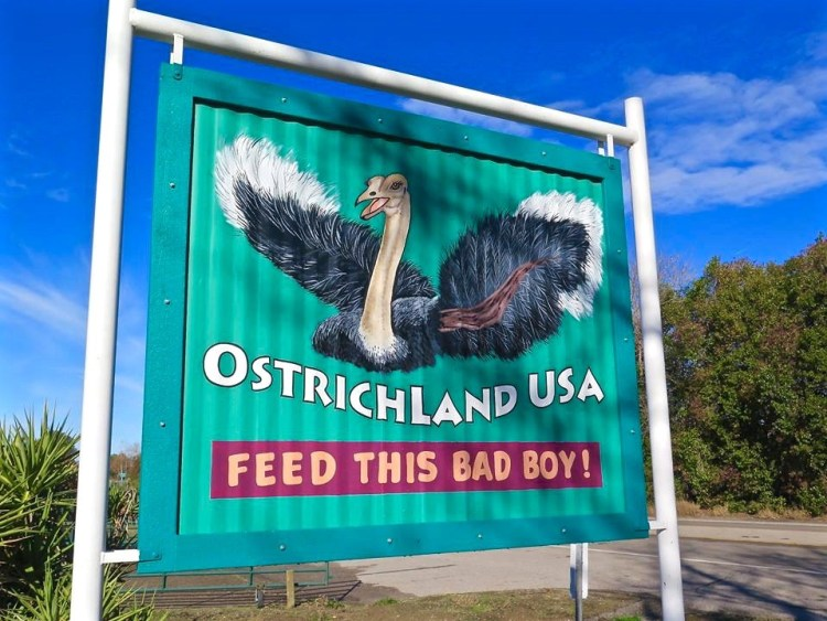 Ostrichland USA is one of those places that most people know about but perhaps never took the time or had the time to stop on your way to somewhere else.