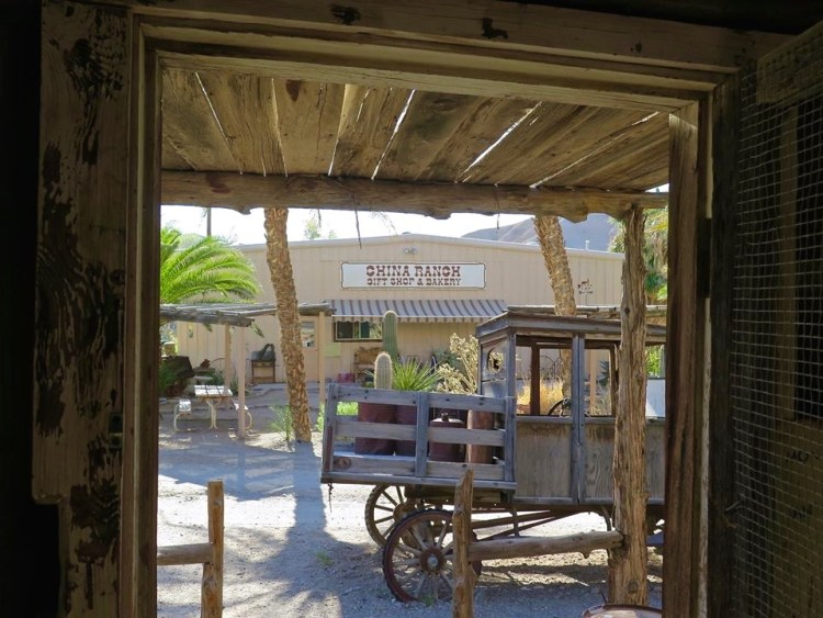 Which just happens to be where the China Ranch Gift Shop and Bakery are located.