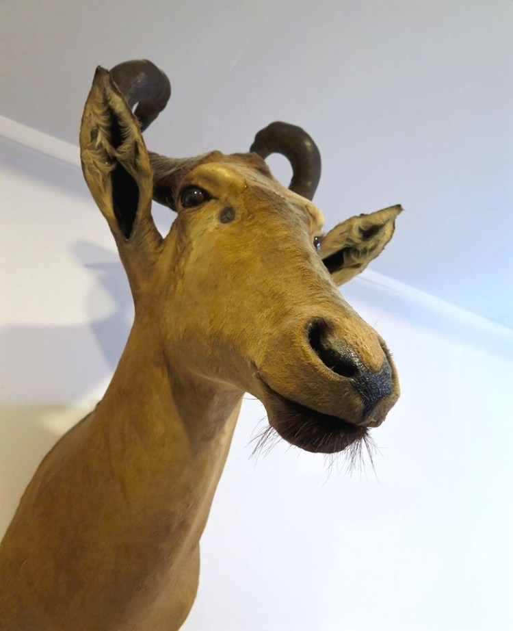 I've always been fascinated with the art of taxidermy.