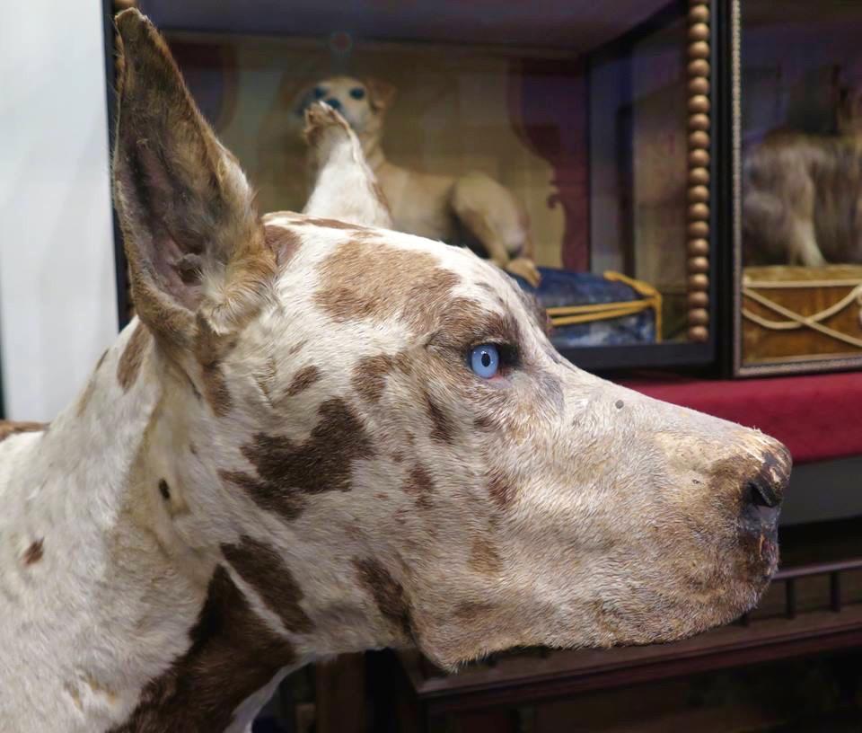 MORBID ANATOMY MUSEUM: BROOKLYN, NY - STRAYNGER RANGER