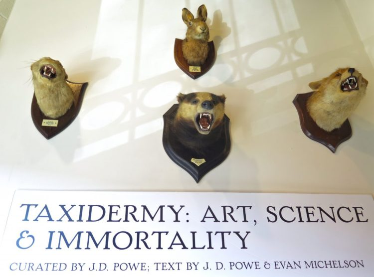 Taxidermy: Art, Science & Immortality Featuring Walter Potter's Kittens' Wedding