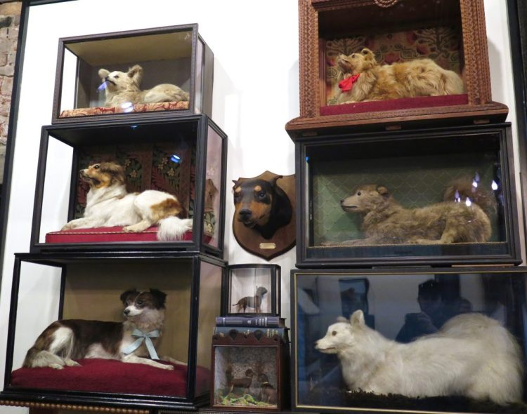 includes over 100 artfully preserved animals, many of which are antique pieces.