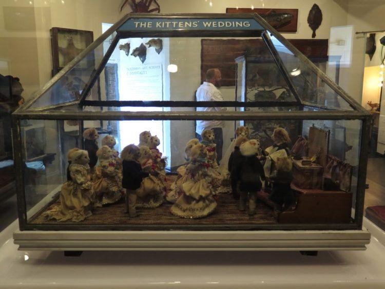 Morbid anatomy museum new york