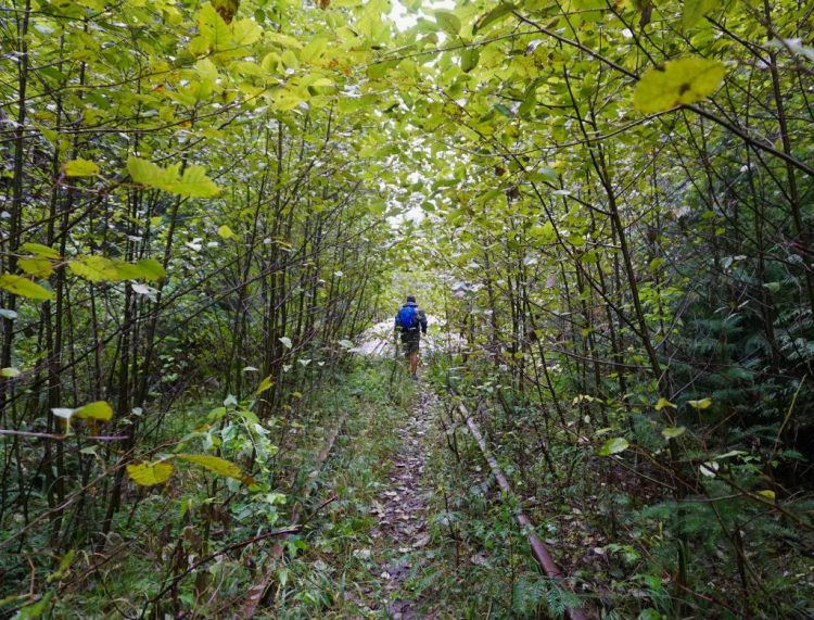 Exploring the Abandoned Railroad of the Salmonberry River Trail