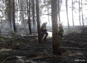 Pożar lasu w Solcy - 23.08.2015r (8)