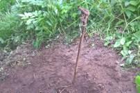 Uwalnianie bobra (1)