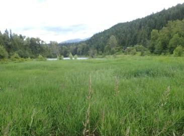 Crooked Horn Farm wetland in 2015 before extensive wetland restoration. Photo: Gregoire Lamoureux.