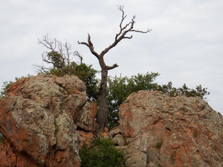 Rocks and Tree