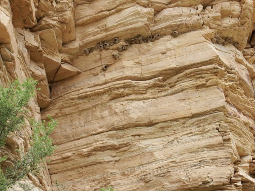 nests in cliff