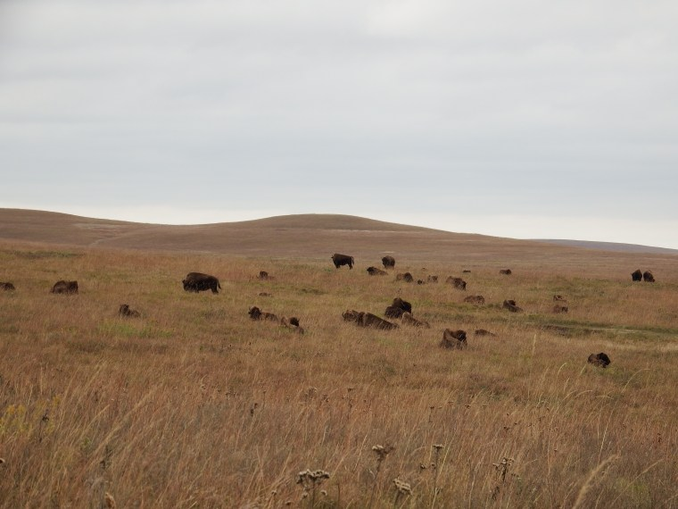 Field of Buffalo