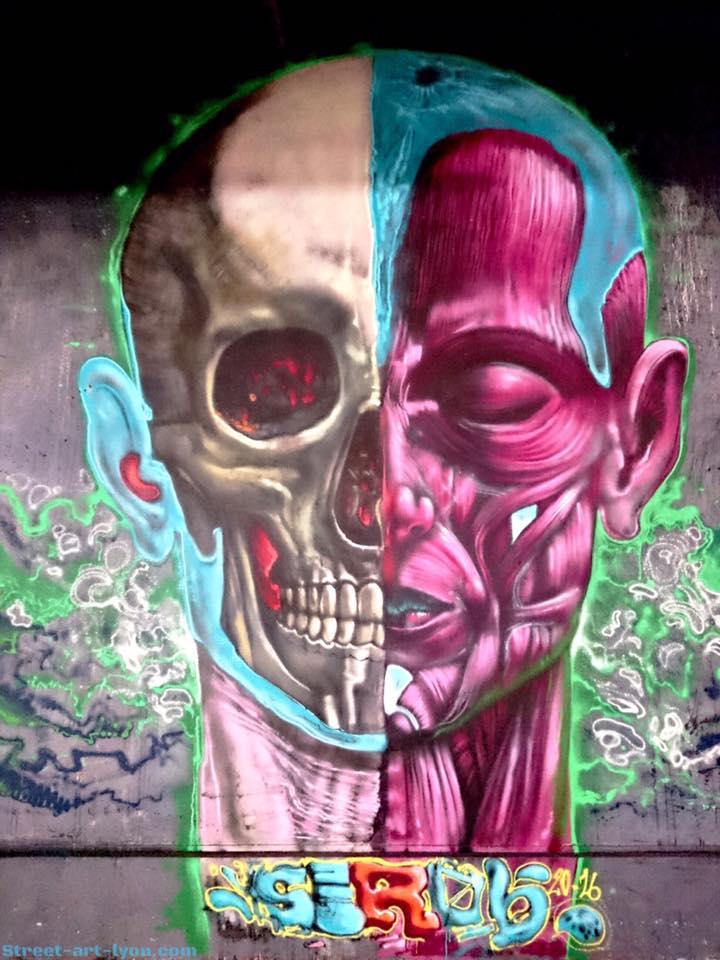 sirob-anatomie