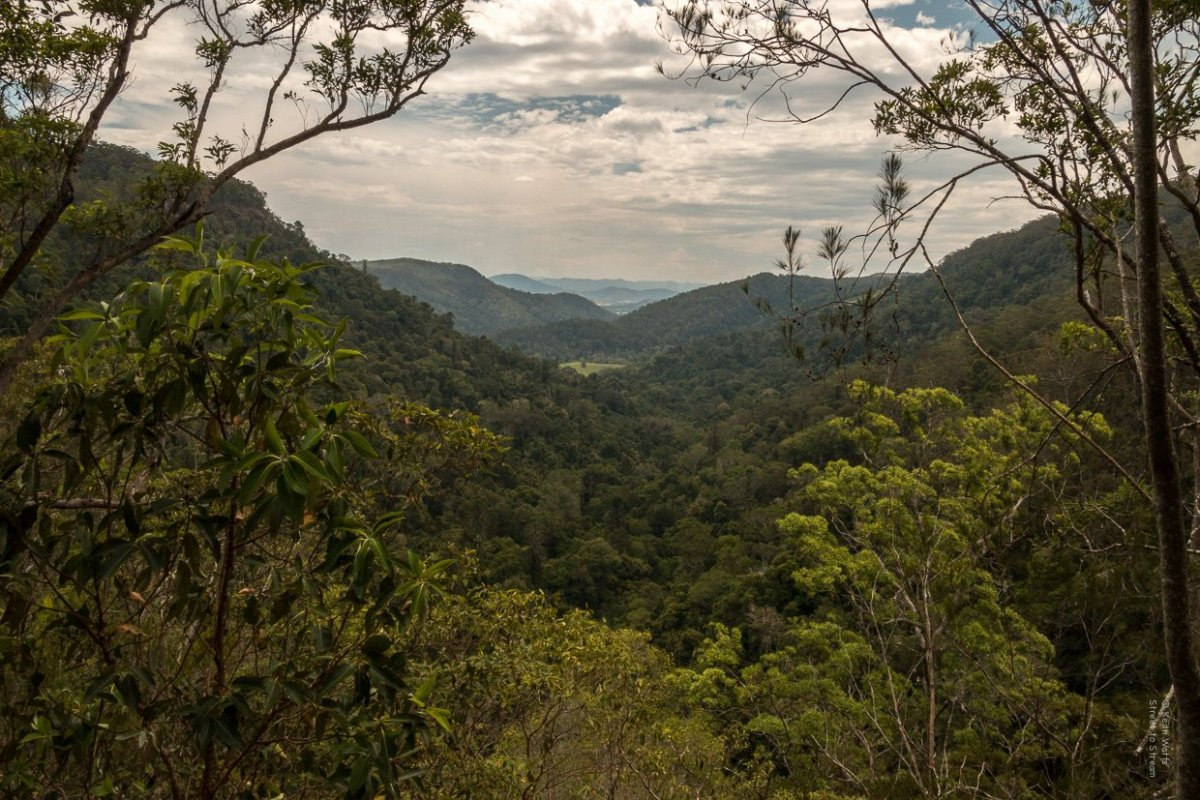 One Of The Great Australian Walks…  Kondalilla Falls National Park