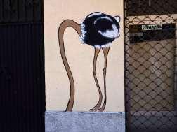 Vogelstrauß