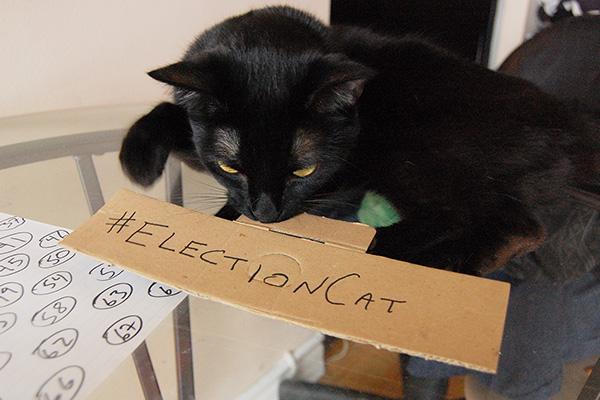 Town Crier Election Cat