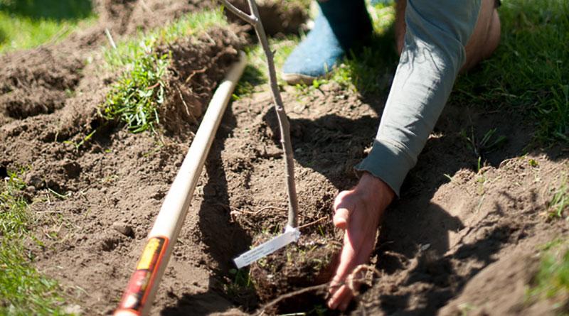 LEAF planting