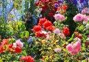 June 22: Leaside garden tour plus flower show
