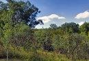 Tuesdays, Saturdays: Explore Wilket Creek Ravine