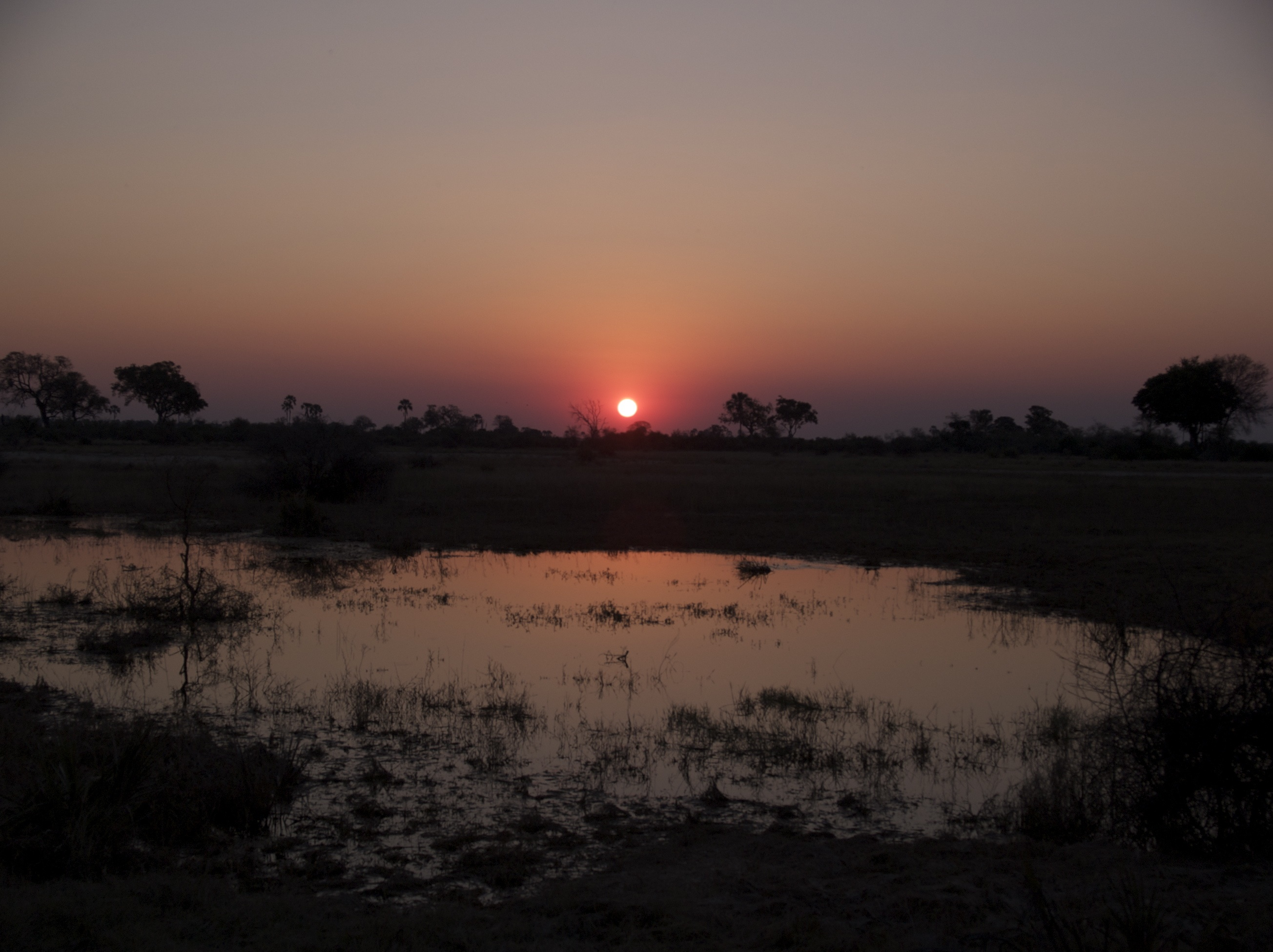 sunset tubu tree 1