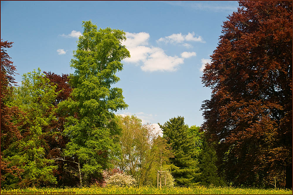 Sommer Colors - Natur - By Marcus Locher - All Rights Reserved!
