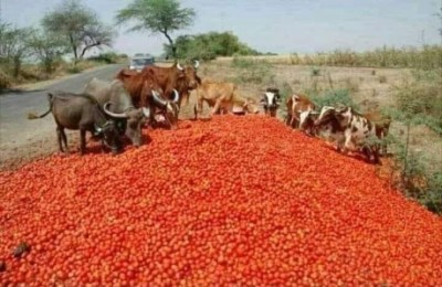 Nigeria to Pay AUFCDN N4.75bn After North-South Food Blockade tomato