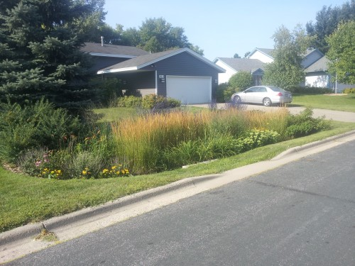Daylillies and Grasses