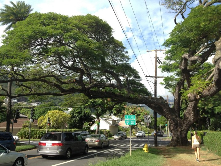 Backroads of Manoa Valley