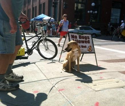 sidewalkdog65