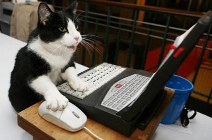 cat working desk