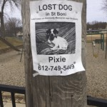 Lost Dog in St. Boni. Last seen on Kennedy Memorial near the Library. Pixie