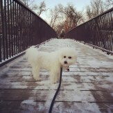 dog on Bryant Avenue Bridge